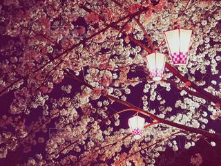 夜桜の写真・画像素材[1094605]