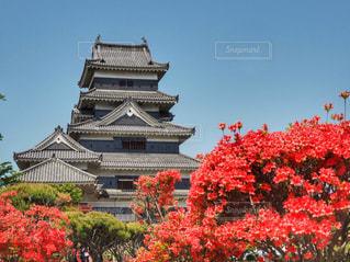 国宝松本城の写真・画像素材[1152346]