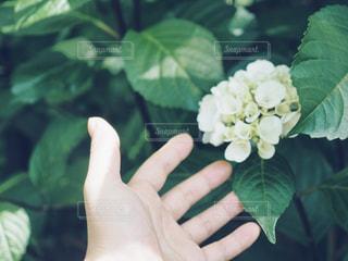 花を持っている手の写真・画像素材[1223841]