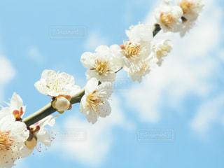 近くの花のアップの写真・画像素材[1835000]