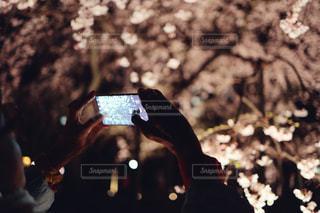 スマホで夜桜を撮影している人の写真・画像素材[1871126]