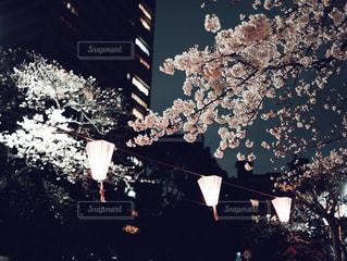夜桜の写真・画像素材[1876615]