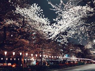 夜の街の景色の写真・画像素材[1876617]
