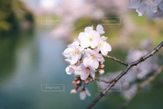 近くの花のアップの写真・画像素材[1879863]