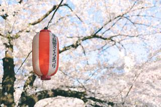 神田川沿いの桜並木の写真・画像素材[1885158]
