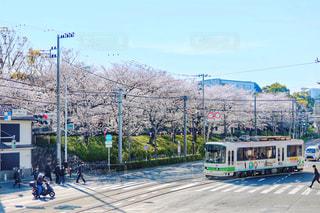 都電と桜の写真・画像素材[1980334]