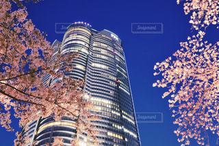 夜桜の写真・画像素材[1980360]