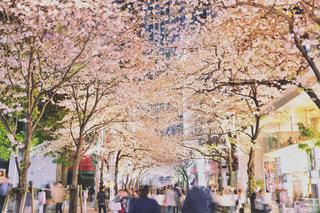 夜桜の写真・画像素材[1980366]