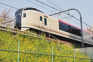 電車と菜の花の写真・画像素材[1980368]