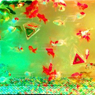 No.629306 金魚