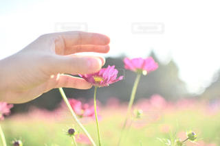 花を持っている人の写真・画像素材[802407]