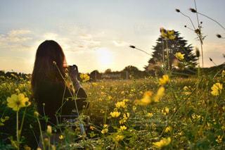 フィールド内の黄色の花 - No.802414