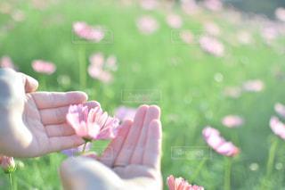 花を持っている手の写真・画像素材[930354]