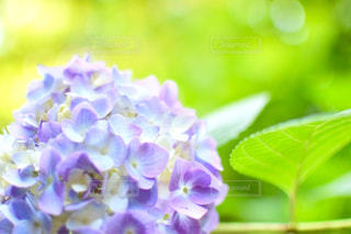 近くの花のアップ - No.932686