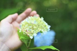 近くに花を持っている人のの写真・画像素材[932687]