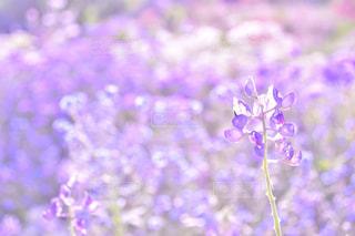植物の紫色の花の写真・画像素材[932697]