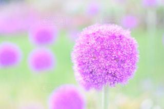近くの花のアップの写真・画像素材[932699]