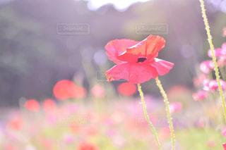 近くの花のアップ - No.932700