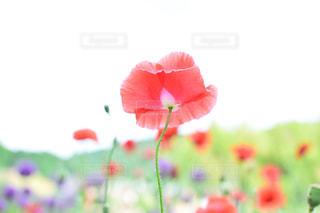 近くの花のアップの写真・画像素材[932701]