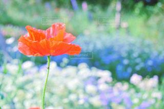近くの花のアップ - No.932702