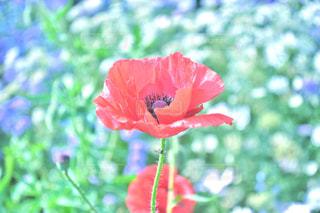 植物にピンクの花 - No.932703