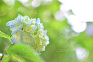 近くの花のアップの写真・画像素材[932704]