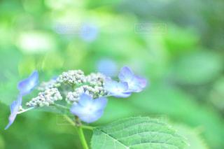 近くの花のアップの写真・画像素材[932705]
