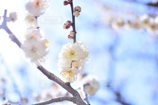 木の枝にとまった鳥の写真・画像素材[932712]