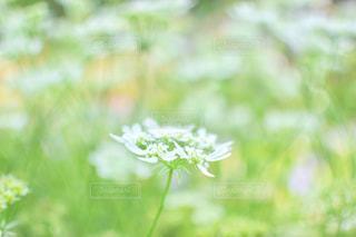 近くの花のアップの写真・画像素材[932719]