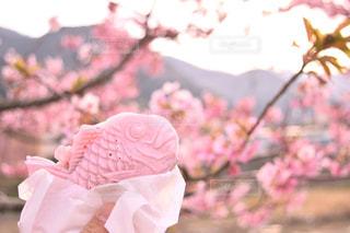 近くの花のアップの写真・画像素材[1082756]