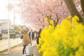 黄色の花の人の写真・画像素材[1082769]