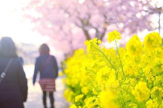 黄色の花の人の写真・画像素材[1082771]