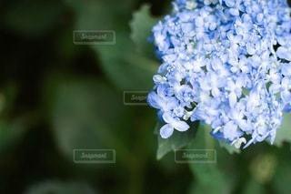 花のクローズアップの写真・画像素材[3388037]
