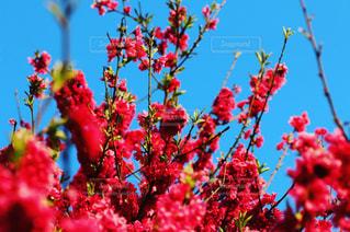 春の写真・画像素材[629298]