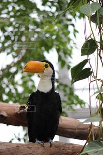 枝の上に座って鳥の写真・画像素材[707120]