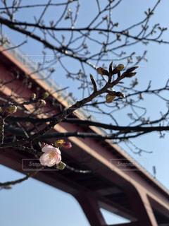 春の足音の写真・画像素材[1020709]