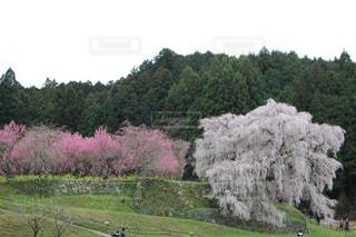 春爛漫の写真・画像素材[2132175]