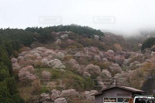 春色の山肌の写真・画像素材[2132180]
