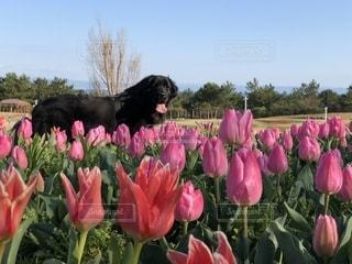 犬の花の写真・画像素材[2132221]