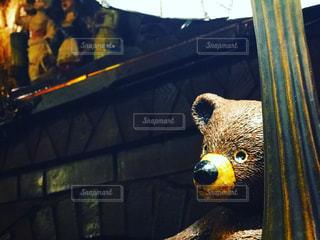 テディー ・ ベアの上に座っているオウムの写真・画像素材[1446643]