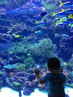 魚の写真・画像素材[631891]