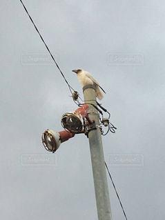 鳥 - No.630001