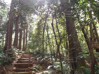トトロの森の写真・画像素材[1149229]