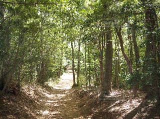 トトロの森の写真・画像素材[1149230]