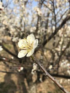 近くの木のアップの写真・画像素材[1034519]