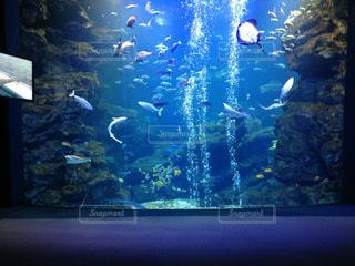 京都水族館の水槽の写真・画像素材[901204]