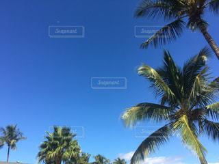 ヤシの木とビーチの写真・画像素材[1450605]