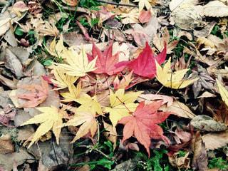 秋の写真・画像素材[644865]