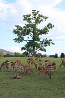 緑豊かな緑の草原に放牧牛の群れ - No.741598