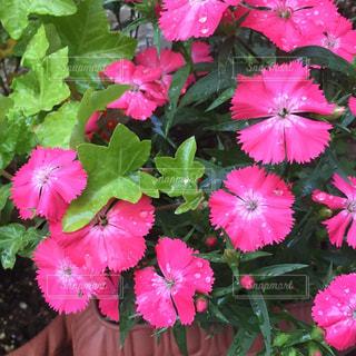 花の写真・画像素材[630209]